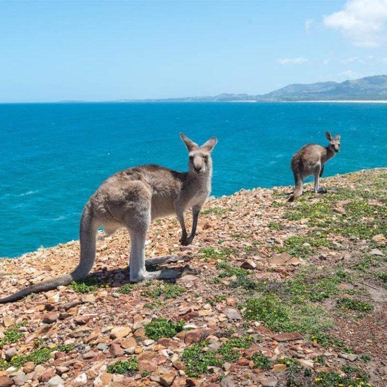 Coffs Harbour holidays